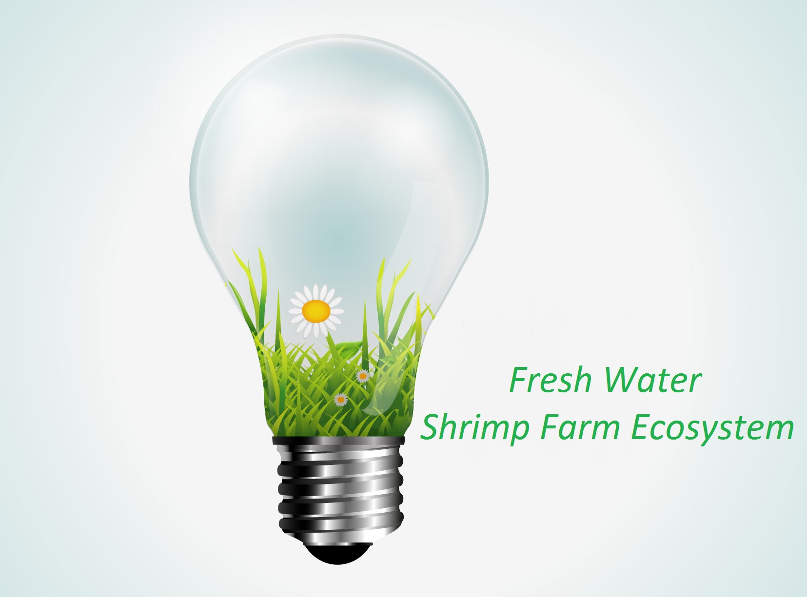 Fresh Shrimp Farm